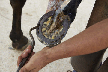 High angle view of farrier putting shoe on horse