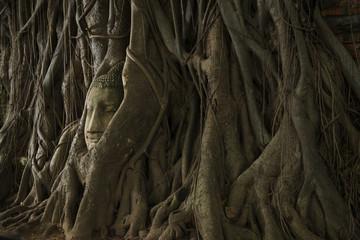Buddha head in tree roots at Wat Phra Mahathat