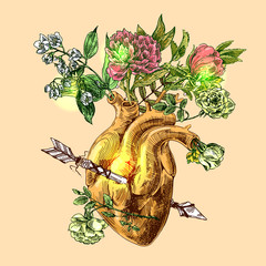 sketch of human heart
