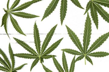Cannabis seven leaf