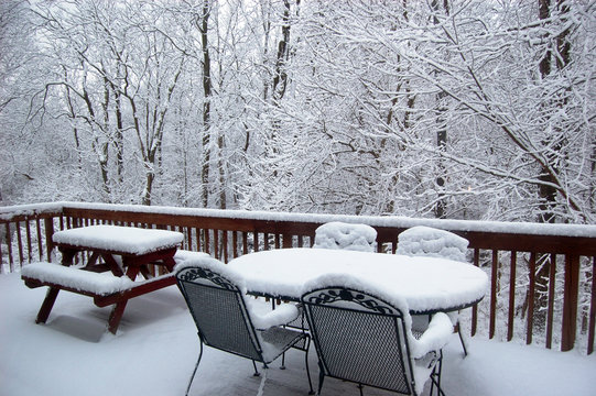 fresh snow on the deck with trees covered in snow in the background