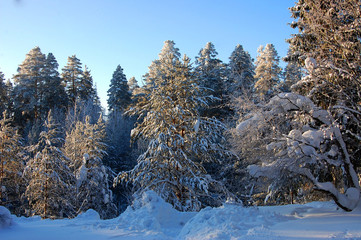 the beauty of winter nature