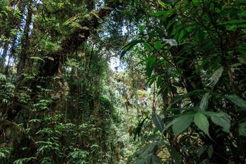 植物 生命の力 息吹 森