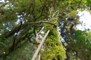 植物 生命の力 息吹 木漏れ日