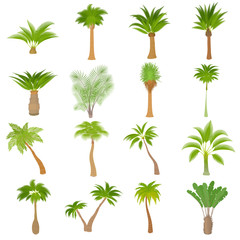 Different palm trees icons set. Cartoon illustration of 16 different palm trees vector icons for web