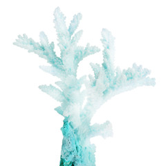 Poster de jardin Sous-marin light cyan small isolated coral branch