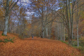 Beech forest of Tobía