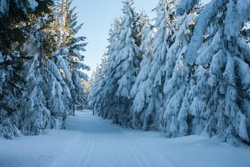 Trasa przez Żmijowiec, Masyw Śnieżnika, Kotlina Kłodzka
