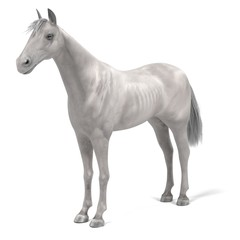 realistic 3d render of white horse