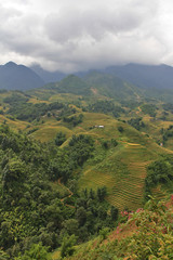 terraced rice and hut on the hill Sapa Vietnam