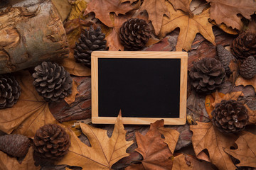 Empty blackboard into the woods, with yellow leaves and pines, free space to write down text.