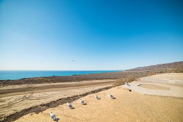 seagulls in Oceanside coastline