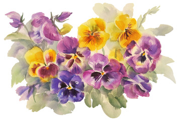 bouquet of violas watercolor isolated