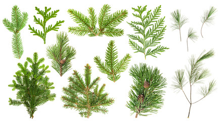 Set coniferous tree branches Spruce pine cypress fir