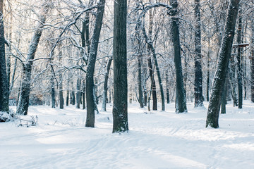Cold winter in beautiful snow forest.