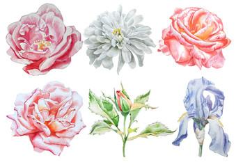 Set with flowers. Rose. Iris. Chrysanthemum. Watercolor illustration.
