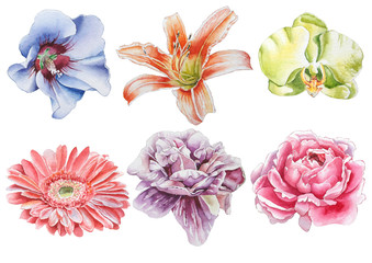 Set with flowers. Rose. Orchid. Lily. Peony. Gerbera. Watercolor illustration.