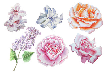 Set with flowers. Rose. lilac. Blossom. Watercolor illustration.