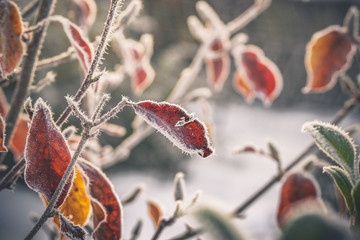 Cold morning with frost on plants