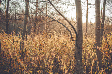 Nettles in the morning sunrise