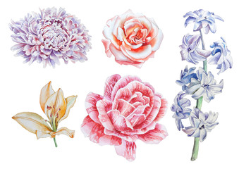 Set with flowers. Rose. Lily. Peony. Hyacinth. Watercolor illustration.