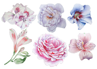 Set with flowers. Rose. Alstroemeria. Hibiscus. Watercolor illustration.