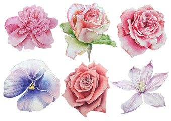 Set with flowers. Rose. Pansies. Watercolor illustration.