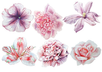 Set with flowers. Rose. Alstroemeria. Pansies. Peony. Clematis. Watercolor illustration.