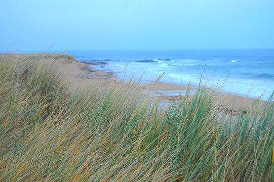 Marram grass growing on sand dunes beside beach.