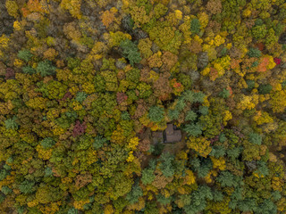 Forest with cabin,  aerial view
