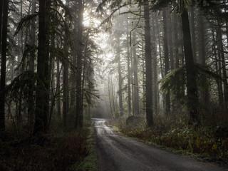 Empty rural road through forest