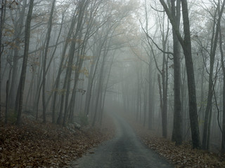 Road through forest, with mist