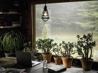 House plants on windowsill