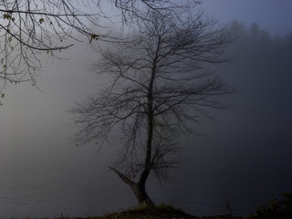 Trees in fog by lake