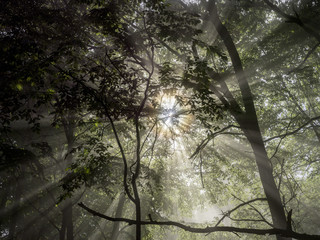 Low angle view of sunlight shining through trees in forest