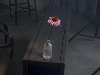 Gerbera in bottle