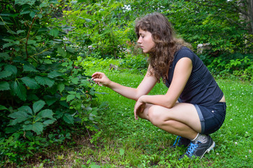 Young woman picking wild black raspberries from bush