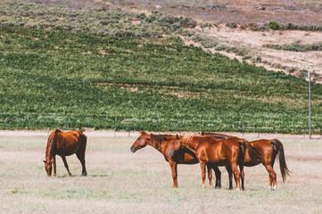 Horse pasture.