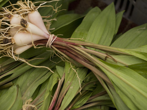 Wild leeks, also called ramps, on display at a NYC farmer's market