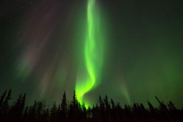 Green Fire - Fire-shape northern lights rising above boreal forest.