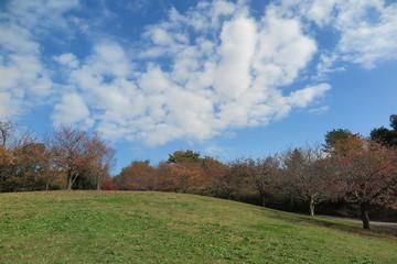 晴天の秋の公園の風景34