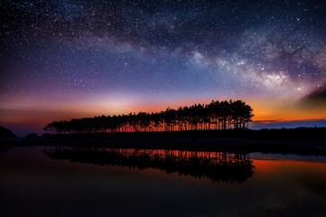 Silhouette of row tree with milky way.
