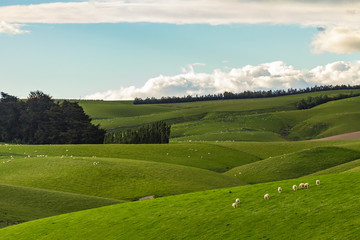 Nature green hills with blue sky in New Zealand