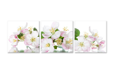 Group of frames with spring flowers pictures collage. Floral decoration, canvas style interior mock up