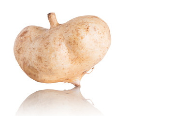 Cassava, Yam bean, Pachyrhizus erosus (L.) Urbar, Jicama on whit
