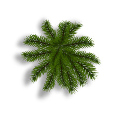 Green fir with realistic shadow. View from above. Fir branches. Isolated on white background. Christmas illustration