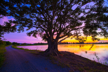 Upcountry tree with silhouette sunset