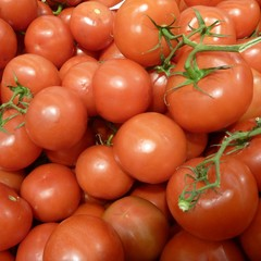 detail of many fresh red round tomatoes