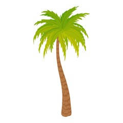 High palm tree icon. Cartoon illustration of high palm tree vector icon for web