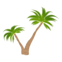 Two palm trees icon. Cartoon illustration of two palm trees vector icon for web